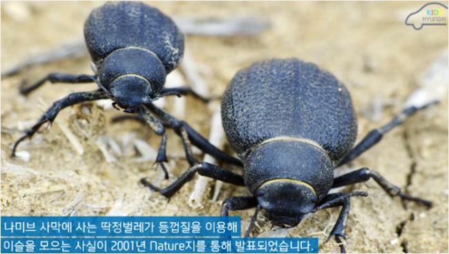 나미브 사막에 사는 딱정벌레가 등껍질을 이용해 이슬을 모으는 사실이 2001년 Nature지를 통해 발표되었습니다.