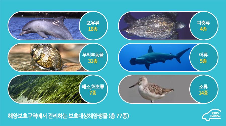 해양보호구역에서 관리하는 보호대상해양생물(총 77종)- 포유류 16종, 파충류 4종, 무척추동물 31종, 어류 5종, 해조, 해초류 7종, 조류 14종