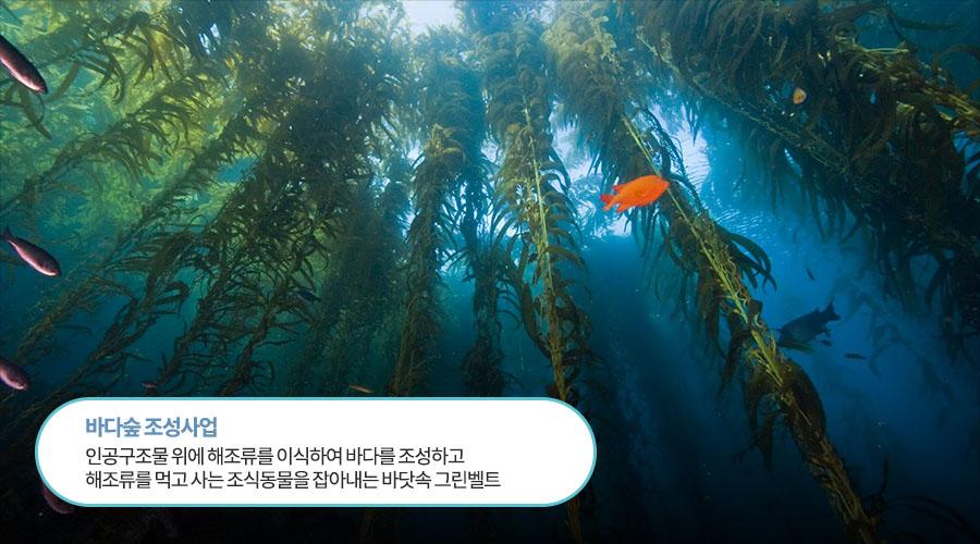 바다숲 조성사업 인공구조물 위에 해조류를 이식하여 바다를 조성하고 해조류를 먹고 사는 조식동물을 잡아내는 바닷속 그린벨트