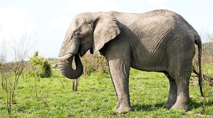 코끼리 사진